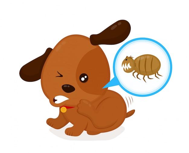 Mignon chien démangeaisons en colère gratte les puces. chien domestique ou errant avec des parasites cutanés.
