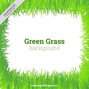 Mignon fond d'herbe verte