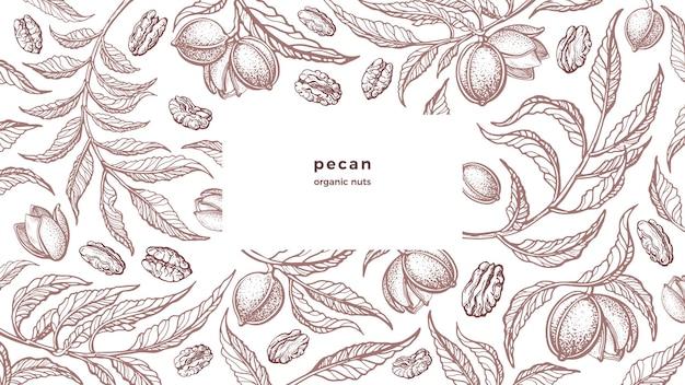 Millésime de noix de pécan. noix biologiques, plantation agricole. texture dessinée à la main