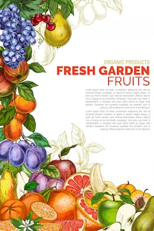Modèle d'affiche de fruits de jardin vertical