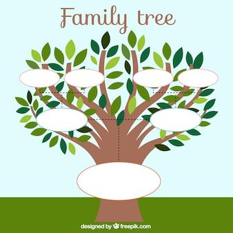 Modèle arbre généalogique avec des feuilles