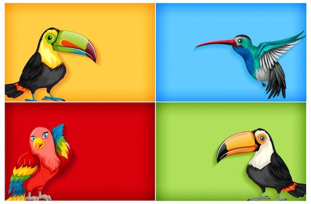 Modèle d'arrière-plan de couleur unie et de nombreux oiseaux