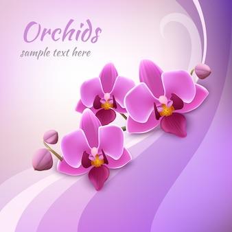 Modèle d'arrière-plan orchidée