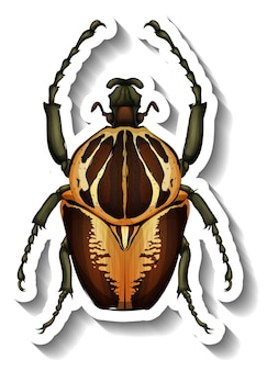 Un modèle d'autocollant avec un scarabée isolé