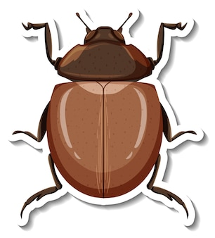 Un modèle d'autocollant avec vue de dessus d'un scarabée isolé