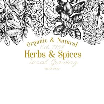 Modèle de bannière d'herbes et d'épices culinaires.