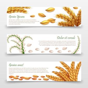 Modèle de bannières de céréales agricoles.