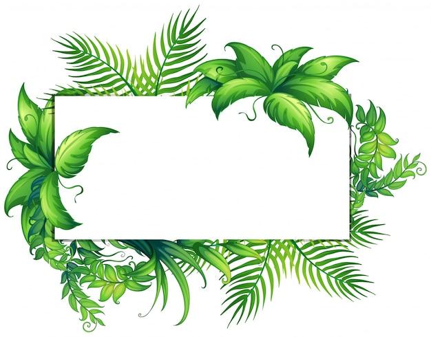 Modèle De Bordure Avec Des Feuilles Vertes Vecteur Premium