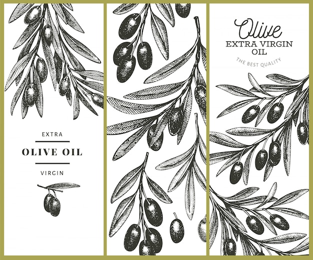 Modèle de branche d'olivier. illustration de nourriture dessinée à la main. plante méditerranéenne de style gravé. image botanique rétro.