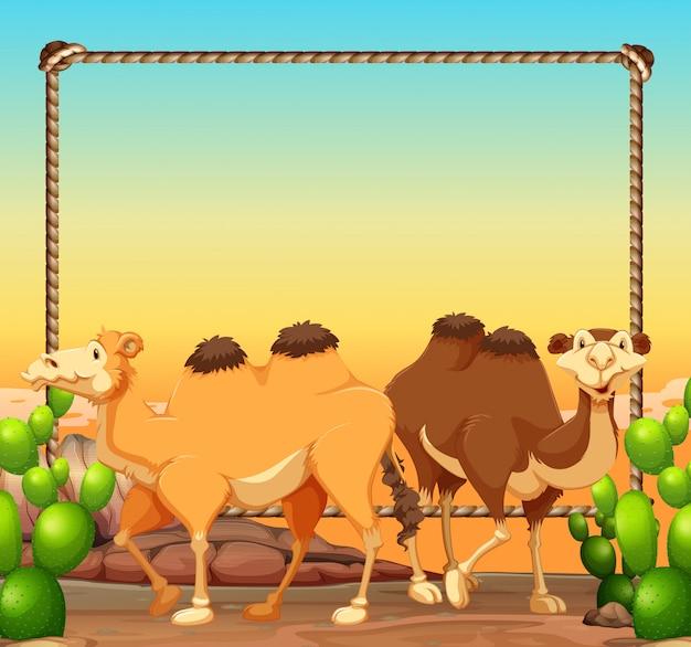 Modèle de cadre avec deux chameaux dans le désert