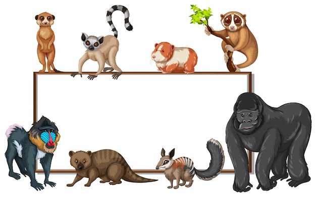 Modèle de carte avec des animaux sauvages