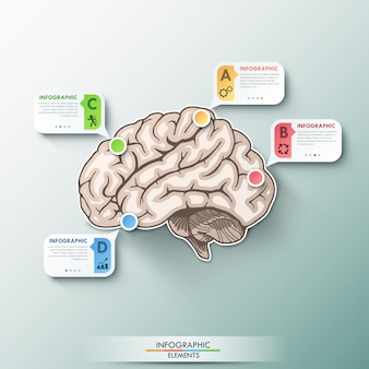 Modèle de cerveau de papier infographie moderne pour 4 options