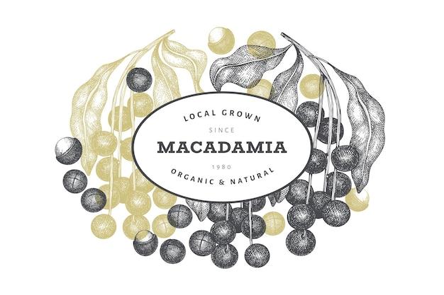 Modèle de conception de branche et de noyaux de macadamia dessinés à la main. illustration vectorielle d'aliments biologiques sur fond blanc. illustration de noix rétro. bannière botanique de style gravé.