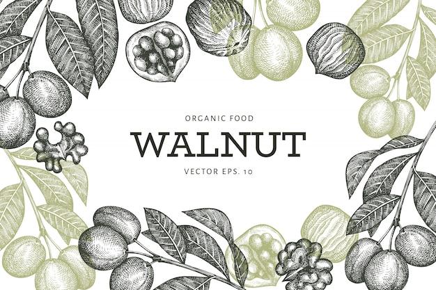Modèle de conception de noyer croquis dessinés à la main. illustration des aliments biologiques. illustration de noix vintage. fond botanique de style gravé.