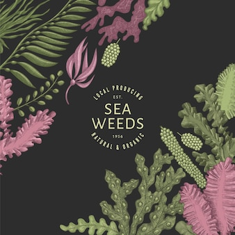 Modèle de couleur d'algues. illustrations d'algues dessinées à la main sur fond sombre. bannière de fruits de mer de style gravé. fond de plantes marines rétro