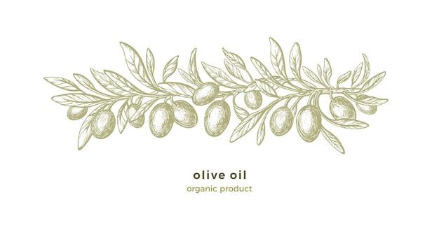Modèle de croquis d'olive. décorations dessinées à la main avec des branches de texture, fruits verts, feuille vintage
