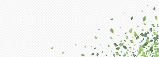 Modèle de fond transparent panoramique de mouche de feuillage de menthe