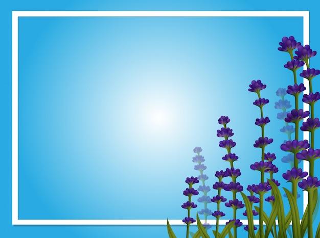 Modèle de frontière avec des fleurs de lavande
