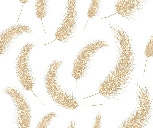 Modèle d'herbe sèche de la pampa boho branche fond transparent d'herbe de la pampa panicule