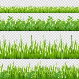 Modèle d'herbes d'herbe. symboles de la nature des feuilles et des herbes fond transparent horizontal