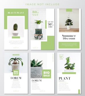 Modèle d'histoires instagram de plantes vertes