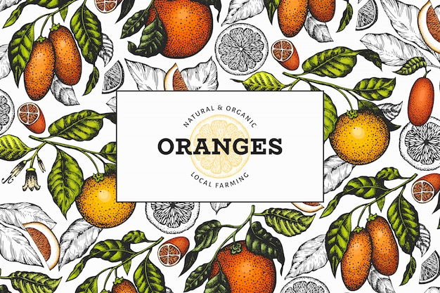 Modèle d'illustration d'oranges dessinées à la main