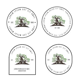 Modèle de logo d'arbre vintage bonsaï