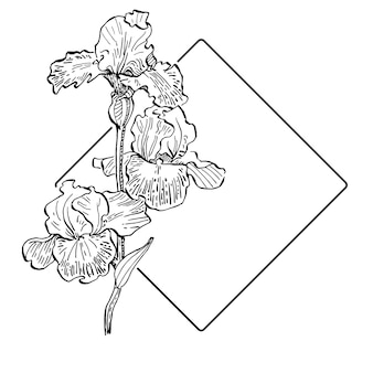 Modèle de logo floral iris dessiné à la main