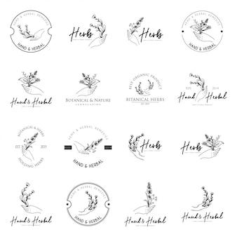Modèle de logo d'herbes vintage en noir et blanc
