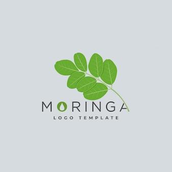 Modèle de logo d'huile de moringa