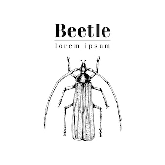 Modèle de logo vectoriel dessiné main vintage vector avec coléoptère, bug, dor, dorr, insecte sur fond blanc. illustration rétro