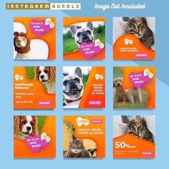 Modèle de publication instagram pour animalerie