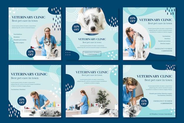 Modèle de publications instagram vétérinaires
