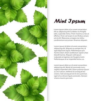 Modèle réaliste de feuilles de menthe fraîche