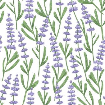 Modèle sans couture botanique avec des fleurs de lavande dessinés à la main sur blanc