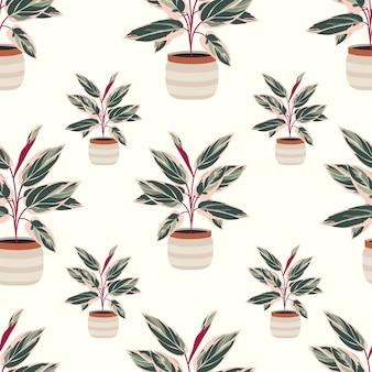 Modèle sans couture calathea plante d'intérieur décoratif