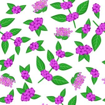 Modèle sans couture de dessin animé de vecteur avec callicarpa ou fruits exotiques de beautyberry, fleurs et feuilles sur fond blanc