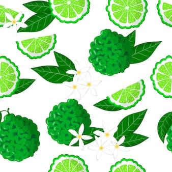 Modèle sans couture de dessin animé de vecteur avec citrus bergamia ou les fleurs et feuilles de fruits exotiques de bergamote sur fond blanc