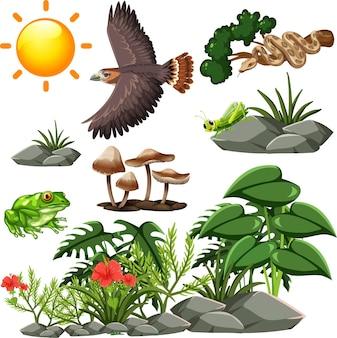 Modèle sans couture de la faune de dessin animé avec de nombreux animaux et plantes sauvages différents