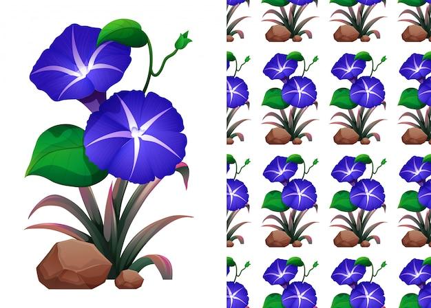 Modèle sans couture avec des fleurs de gloire du matin bleu