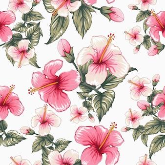 Modèle sans couture fleurs d'hibiscus sur des renseignements blancs.