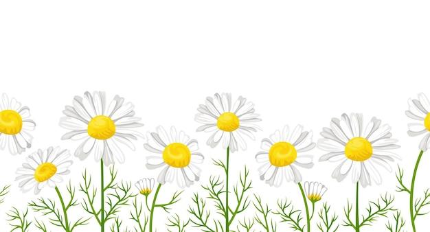 Modèle sans couture de fleurs de marguerite, bordure florale de dessin animé.