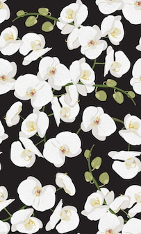 Modèle sans couture florale d'orchidée blanche