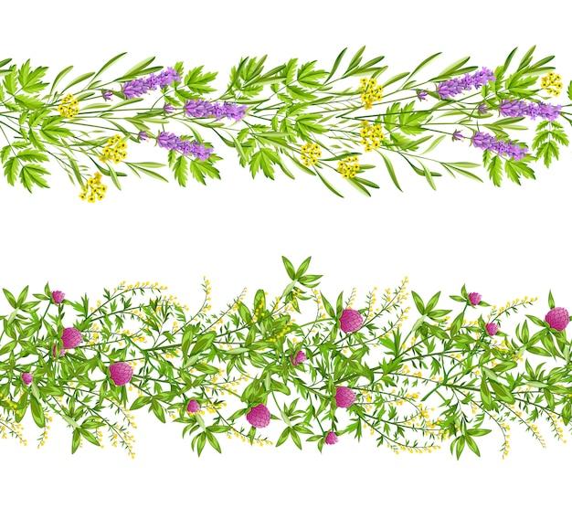 Modèle sans couture d'herbes et de fleurs sauvages
