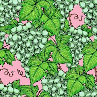Modèle sans couture d'illustration de branche de raisin