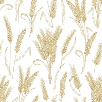 Modèle sans couture naturel avec des épis de blé sur fond blanc. toile de fond avec des céréales cultivées, des céréales ou des cultures. illustration vectorielle réaliste dans un style rétro pour papier d'emballage, impression de tissu.