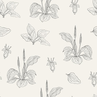 Modèle sans couture naturel avec des plantains à fleurs.