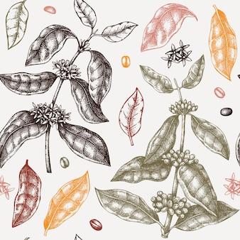 Modèle sans couture de plante de café esquissée à la main