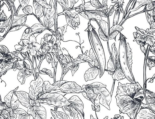 Modèle sans couture de vecteur avec des plantes potagères dessinées à la main dans le style de croquis. pomme de terre, pois, feuilles et fleurs de concombre. dessin détaillé de nourriture végétarienne.