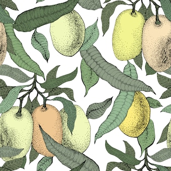 Modèle sans couture vintage de manguier. fond de fruits de mangue botanique. mangue gravée. illustration rétro